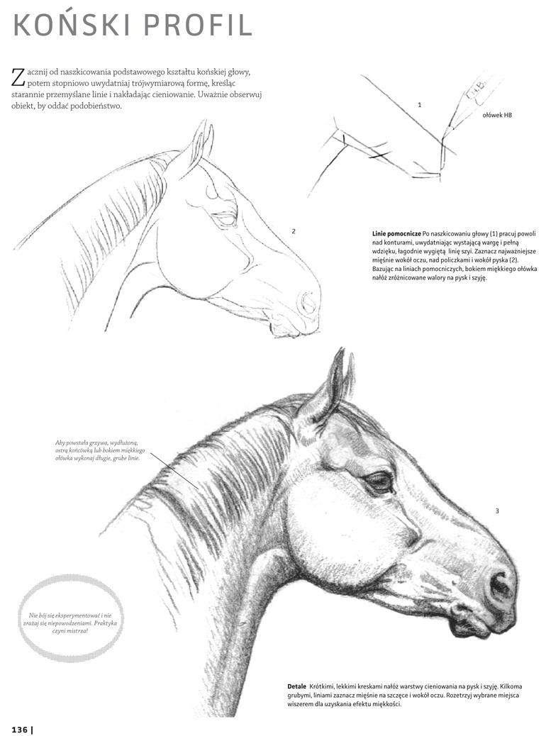 Rysowanie konia krok po kroku