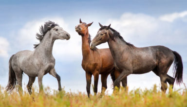 28d5bfedc1e1f Portal miłosników koni, portal jeździecki - Lucky Horse